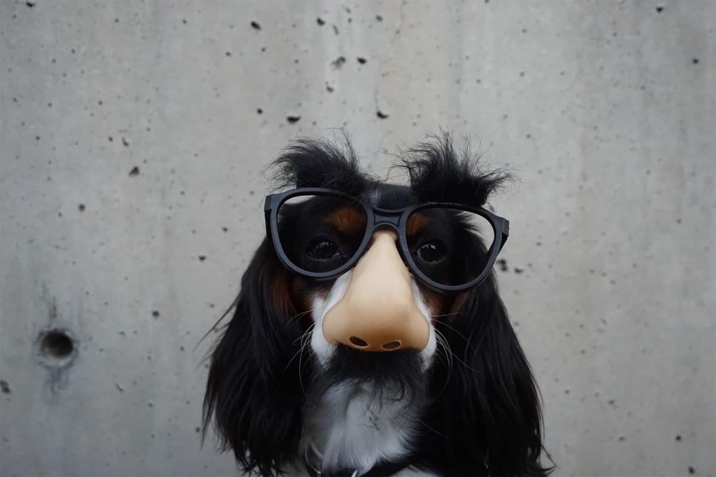 A funny dog to improve your website design