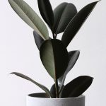 A green leafy plant with a grey background